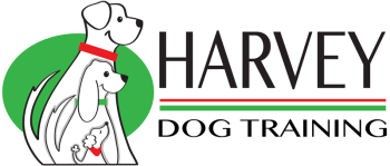 Harvey Dog Training Brisbane | Puppy School, Obedience Classes